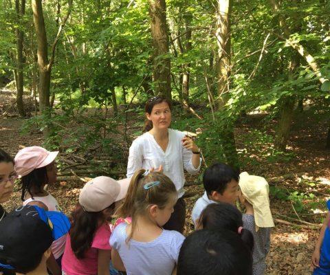 Walddetektive  unsere Vorschulklasse forscht